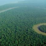 Pesquisadores encontram árvore mais alta da Amazônia, que pode ter mais de 400 anos de existência